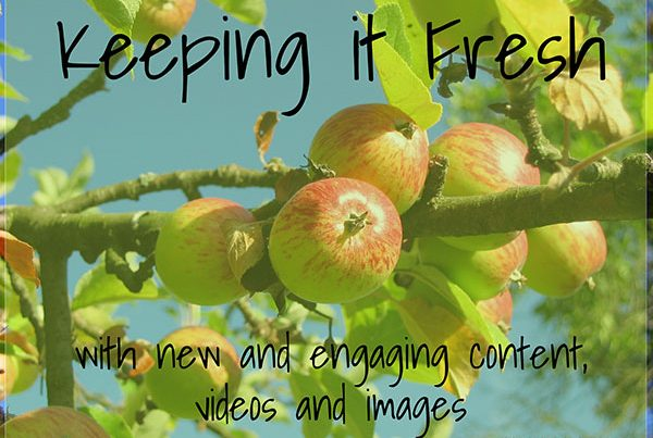 Content Creation | Cultivate Web Design | Harvest Your Online Potential | Keeping it Fresh